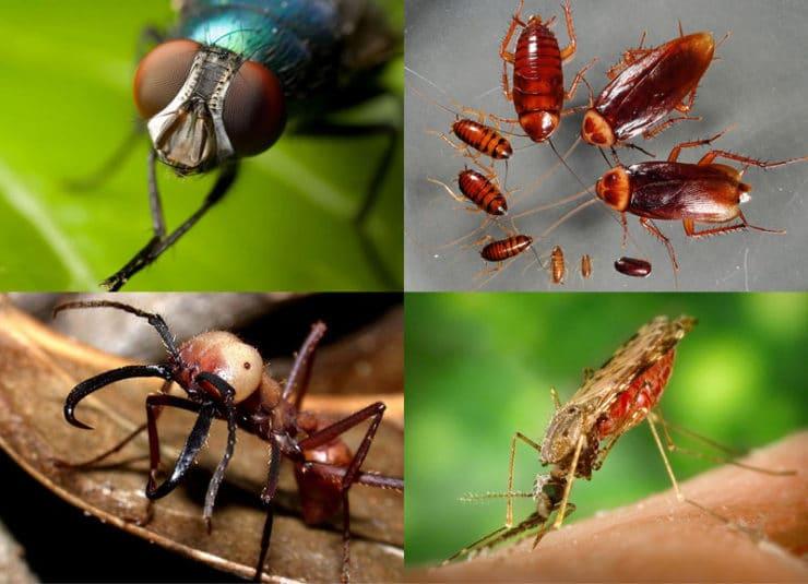 Белые насекомые в ванной: как избавиться от чешуйницы и мокриц?