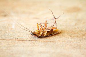 Борная кислота от муравьев в жилище: правила применения отравы