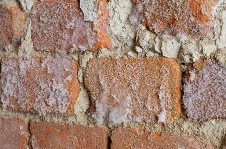 Плесень на стене в квартире: что делать и как избавиться народными средствами?
