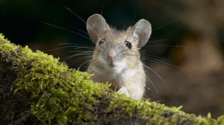 """Как гарантированно избавиться от крыс и мышей на даче. Обзор препарата """"Ратобор"""""""