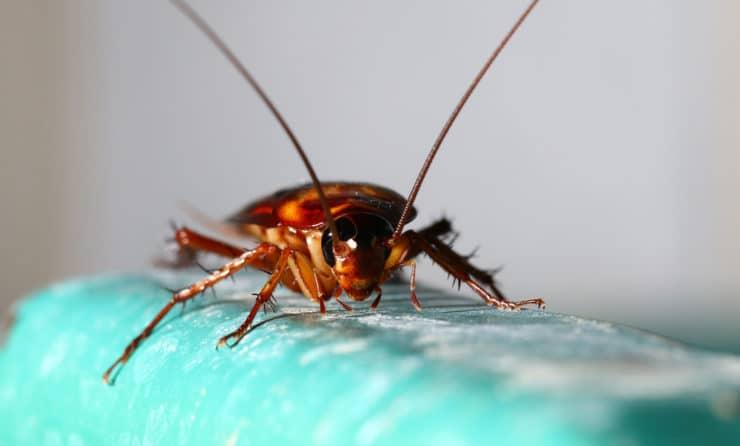 Тараканы в кровати как избавиться