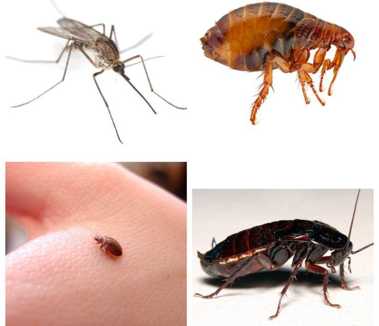 часа насекомые в квартире в картинках с названием верхнем меню она
