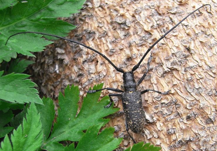 Большой черный жук название
