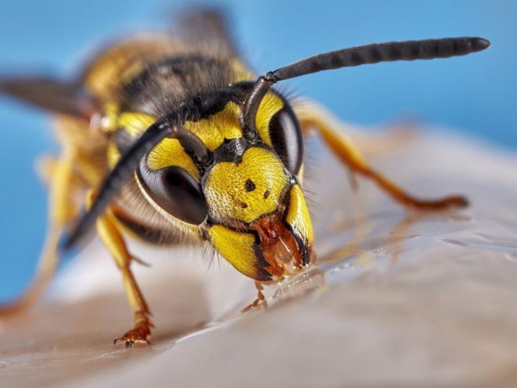 Как снять опухоль после укуса осы?