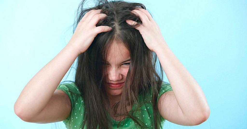 Как выглядят вши и гнид на волосах фото