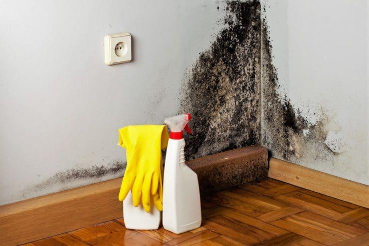 Как избавиться от грибка в квартире навсегда
