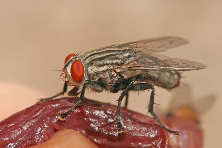 Как быстро избавиться от мух в квартире